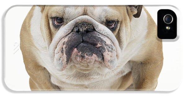 Canid iPhone 5 Cases - Grumpy Bulldog iPhone 5 Case by John Daniels