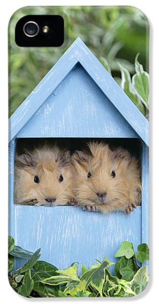 Shed iPhone 5 Cases - Guinea Pig in House GP104 iPhone 5 Case by Greg Cuddiford