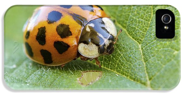 Harlequin Ladybird IPhone 5 / 5s Case by Heath Mcdonald