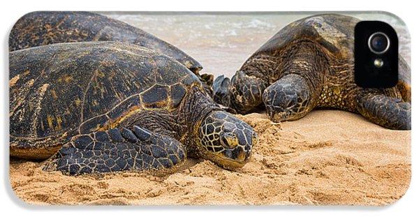 Shells iPhone 5 Cases - Hawaiian Green Sea Turtles 1 - Oahu Hawaii iPhone 5 Case by Brian Harig
