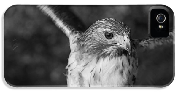 Hawk iPhone 5 Cases - Hawk Attack Black And White iPhone 5 Case by Dan Sproul