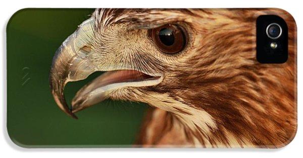 Hawk iPhone 5 Cases - Hawk Eyes iPhone 5 Case by Dan Sproul