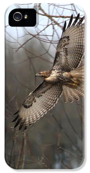 Red Tailed Hawk iPhone 5 Cases - Hawk in Flight iPhone 5 Case by Angie Vogel
