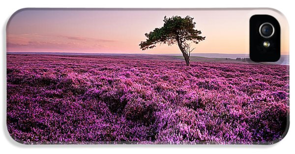 Trees iPhone 5 Cases - Heather at Sunset Egton Moor iPhone 5 Case by Janet Burdon