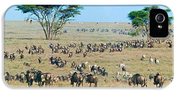 Roaming iPhone 5 Cases - Herd Of Wildebeest And Zebras iPhone 5 Case by Panoramic Images