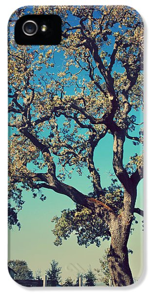 High Spirits IPhone 5 / 5s Case by Laurie Search