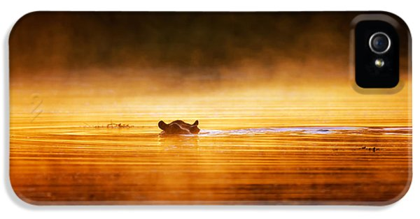 Backlight iPhone 5 Cases - Hippopotamus at sunrise over misty river iPhone 5 Case by Johan Swanepoel