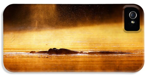 Blowing iPhone 5 Cases - Hippopotamus blowing air at sunrise over misty river iPhone 5 Case by Johan Swanepoel