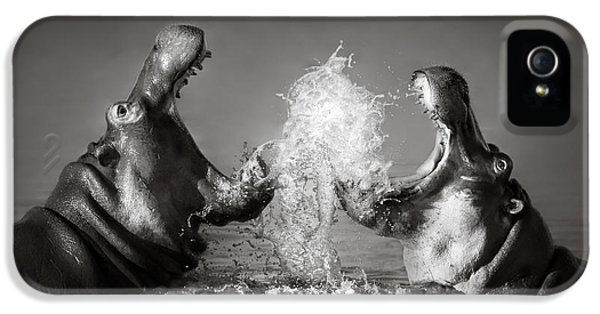 Nobody iPhone 5 Cases - Hippos fighting iPhone 5 Case by Johan Swanepoel