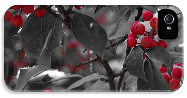 Black Snow iPhone 5 Cases - Holiday Holly iPhone 5 Case by David Rucker