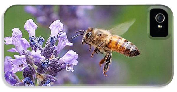 Bee iPhone 5 Cases - Honey Bee and Lavender iPhone 5 Case by Rona Black