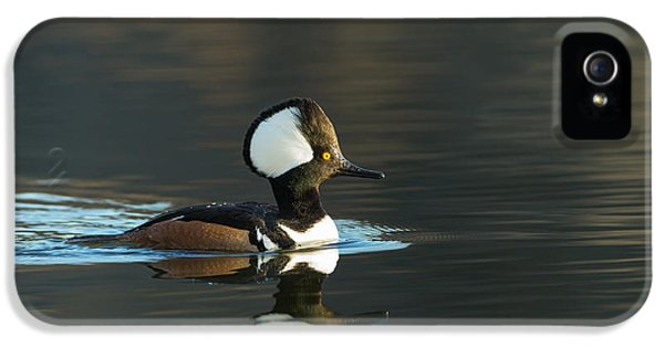 Oswego iPhone 5 Cases - Hooded Merganser in spring iPhone 5 Case by Everet Regal
