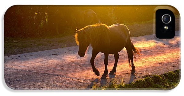 Horse iPhone 5 Cases - Horse Crossing The Road At Sunset iPhone 5 Case by Mikel Martinez de Osaba