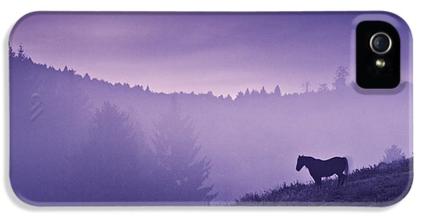 Horse iPhone 5 Cases - Horse in the mist iPhone 5 Case by Yuri Santin
