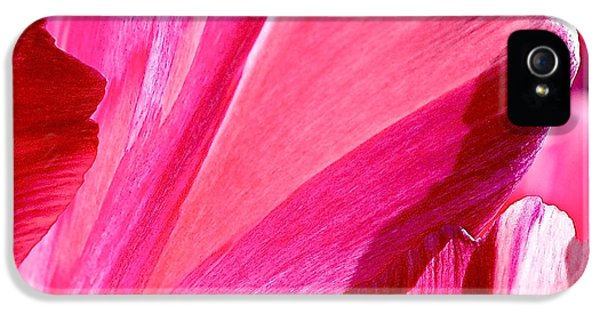 Tulips iPhone 5 Cases - Hot Pink iPhone 5 Case by Rona Black
