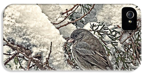 Passeridae iPhone 5 Cases - House Sparrow iPhone 5 Case by Jim Finch