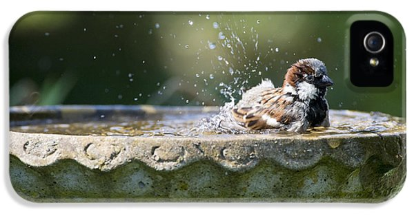 Passeridae iPhone 5 Cases - House Sparrow Washing iPhone 5 Case by Tim Gainey