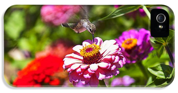 Garden iPhone 5 Cases - Hummingbird Flight iPhone 5 Case by Garry Gay