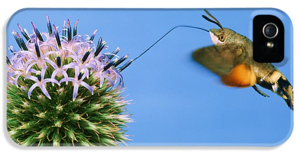 Echinops iPhone 5 Cases - Hummingbird Hawk-moth iPhone 5 Case by Hermann Eisenbeiss