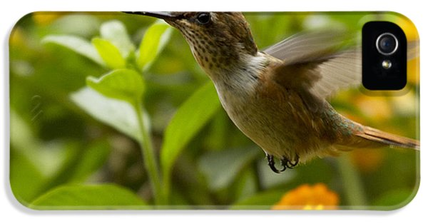 Hummingbird Looking For Food IPhone 5 / 5s Case by Heiko Koehrer-Wagner