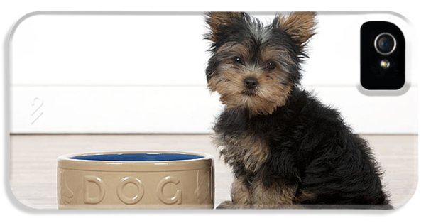 Patiently iPhone 5 Cases - Hungry Yorkie Puppy iPhone 5 Case by John Daniels