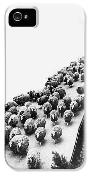 Hyde Park Sheep Flock IPhone 5 / 5s Case by Underwood Archives