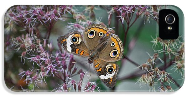 Central Il iPhone 5 Cases - I See You Butterfly iPhone 5 Case by Thomas Woolworth