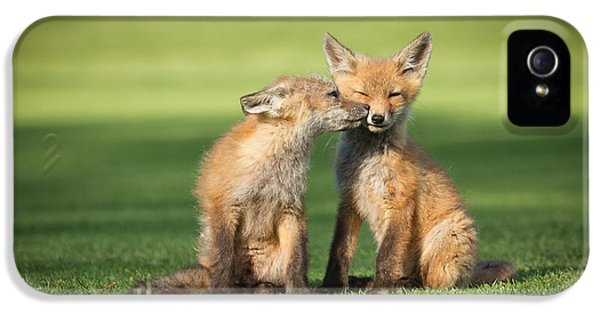 Fox Kits iPhone 5 Cases - I Still Love You iPhone 5 Case by Everet Regal