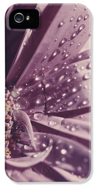 Dewdrop iPhone 5 Cases - I Was Crying iPhone 5 Case by Laurie Search