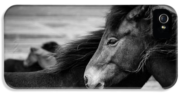 Scandinavian iPhone 5 Cases - Icelandic Horses iPhone 5 Case by Dave Bowman