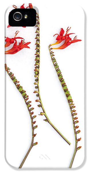 High Key iPhone 5 Cases - If Seahorses Were Flowers iPhone 5 Case by Carol Leigh