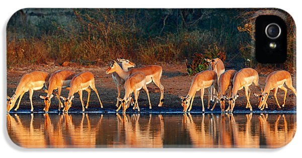 Many iPhone 5 Cases - Impala herd with reflections in water iPhone 5 Case by Johan Swanepoel