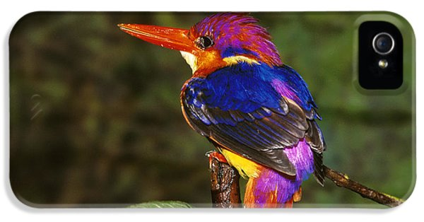 India Three Toed Kingfisher IPhone 5 / 5s Case by Anonymous