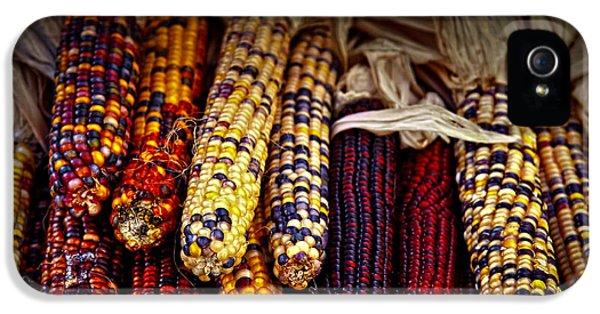 Autumn iPhone 5 Cases - Indian corn iPhone 5 Case by Elena Elisseeva