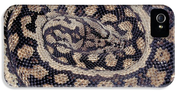Inland Carpet Python  IPhone 5 / 5s Case by Karl H Switak