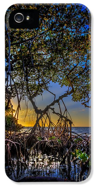 Bayou iPhone 5 Cases - Inside Looking Out iPhone 5 Case by Marvin Spates