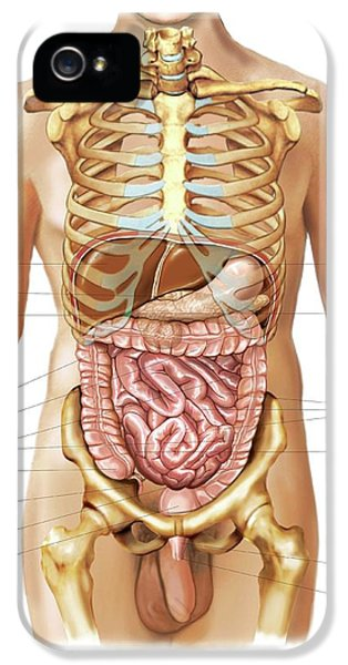 Intestines IPhone 5 / 5s Case by Asklepios Medical Atlas