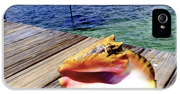 Conch iPhone 5 Cases - Island Conch iPhone 5 Case by Carey Chen