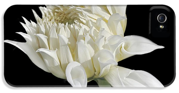 Ivory Flower iPhone 5 Cases - Ivory Dahlia Flower in the Beginning iPhone 5 Case by Jennie Marie Schell