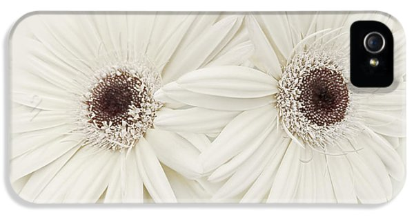 Ivory Flower iPhone 5 Cases - Ivory Gerber Daisy Flowers iPhone 5 Case by Jennie Marie Schell