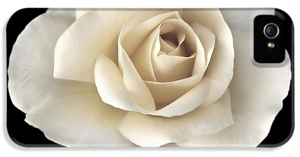 Ivory Roses iPhone 5 Cases - Ivory Rose Flower Portrait iPhone 5 Case by Jennie Marie Schell