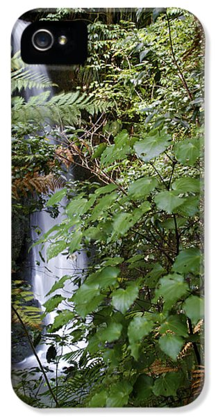 Ecology iPhone 5 Cases - Jungle water iPhone 5 Case by Les Cunliffe