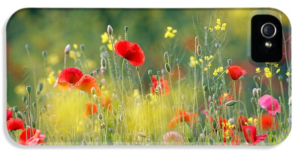 Macro iPhone 5 Cases - Just a Perfect Day iPhone 5 Case by Roeselien Raimond
