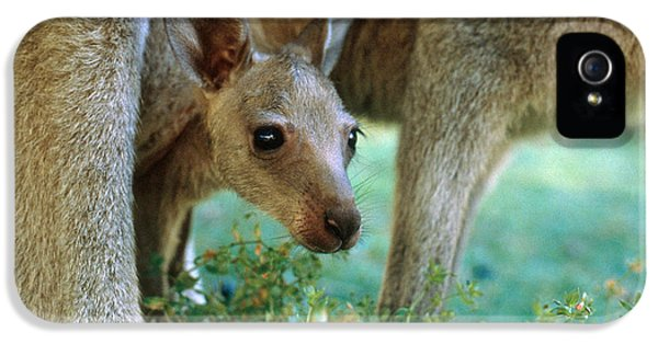 Kangaroo Joey IPhone 5 / 5s Case by Mark Newman