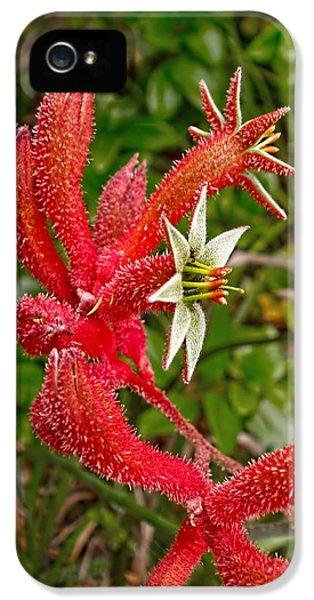 Tubular iPhone 5 Cases - Kangaroo Paw - Red           iPhone 5 Case by Kaye Menner