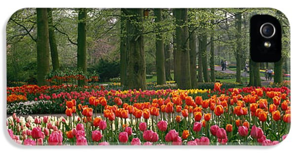 Tulips iPhone 5 Cases - Keukenhof Garden, Lisse, The Netherlands iPhone 5 Case by Panoramic Images