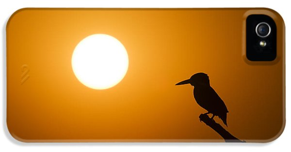 Aves iPhone 5 Cases - Kingfisher Sunset iPhone 5 Case by Tim Gainey