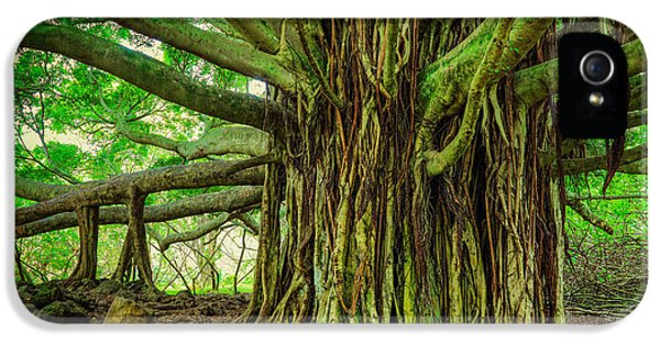 Twist iPhone 5 Cases - Kipahulu Banyan Tree iPhone 5 Case by Inge Johnsson