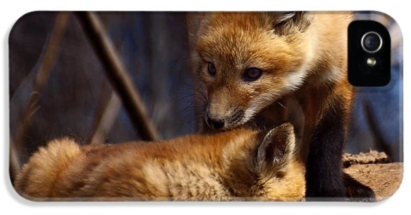 Kits iPhone 5 Cases - Kit Foxes iPhone 5 Case by Thomas Young