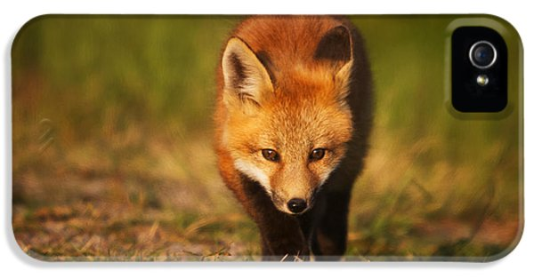 Fox Kits iPhone 5 Cases - Kit on the Prowl iPhone 5 Case by Mark Kiver